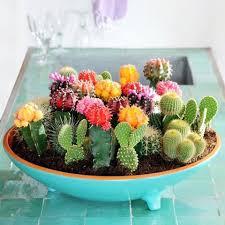 diy cactus garden idea home design garden u0026 architecture blog