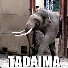 Elephant Meme - tadaima elephants know your meme