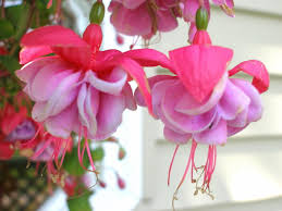 Hanging Flowers Hanging Flowers By Misskat345 On Deviantart