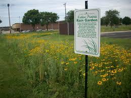 native prairie plants mennonite church of normal creation care
