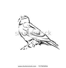swimming pelican bird big beak vector stock vector 481633126