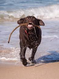 Animal Trainers Salary Why Does Your Dog Go Crazy After A Bath Simply For Dogs