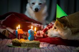 dog birthday party dog birthday party ideas we are so stealing for our dogs rover