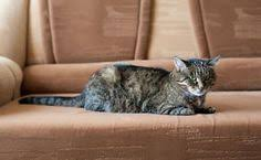 best sofa fabric for dogs keep your home fresh with 5 pet friendly fabrics fabrics living