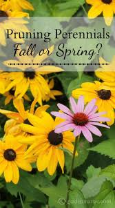 pruning perennials during the fall or spring winter season
