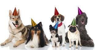 dog birthday party why you should celebrate your dog birthday party