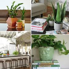 plants for decorating home awesome fresh ideas for decorating
