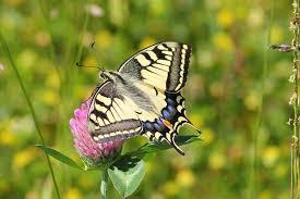 an introduction to butterfly gardening beginner gardening ideas