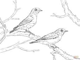 eastern bluebird pair coloring page free printable coloring pages