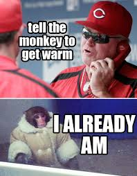 Ikea Monkey Meme - mlb the ikea monkey meme now in mlb form facebook