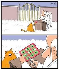 Cartoon Cat Memes - funny cat in heaven cartoon