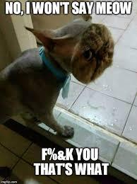 Meme Kitty - meme challenge 44 here kitty kitty steemit