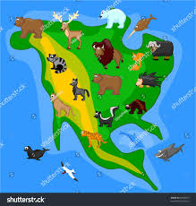 Map Of North America With Mountains by Animals North America Including Grizzly Bears Stock Vector