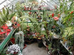 Inside Greenhouse Ideas by Boyce U0027s Gardens