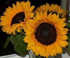 Fall Flowers For Weddings In Season - in season flowers for your fall wedding official hebeos blog