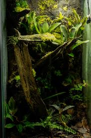 the world u0027s best photos of ranitomeya and terrarium flickr hive mind