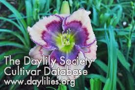 ahs daylily cultivar celtic butterfly