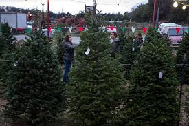 a christmas tree shortage is driving higher prices at lots this