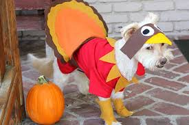 how to make turkey feathers how to make a turkey costume for a dog cuteness