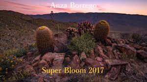 anza borrego super bloom 2017 on vimeo