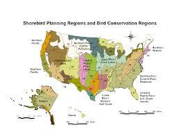 Us Regions Map Regional Shorebird Conservation Plans