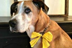 dog ribbon this yellow ribbon dogs send a safety message babycenter