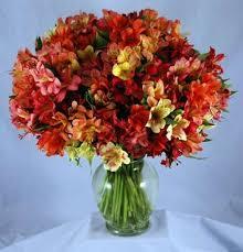 peruvian lilies 200 blooms peruvian lilies kremp