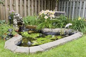 Best Way To Get Rid Of Mosquitoes In Your Backyard 7 Easy Ways To Stop Mosquitoes From Breeding In Your Yard