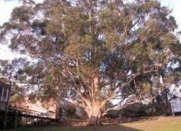 tree of knowledge federation australia