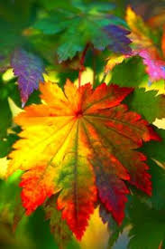 colors autumn leaves mother nature autumn scenery