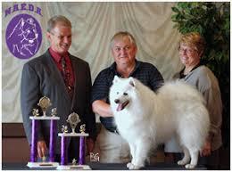 american eskimo dog breeders new england american eskimo dog breeders canada u0027s guide to dogs american