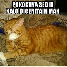 Meme Kucing - meme kucing indonesia meme kucingid instagram photos and videos