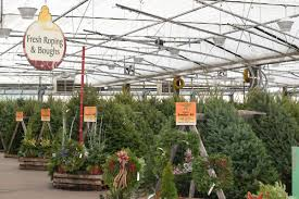 locally grown fresh cut christmas trees syracuse ny