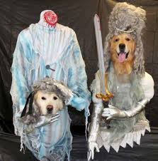 costumes for dogs costumes for dogs creative make your own