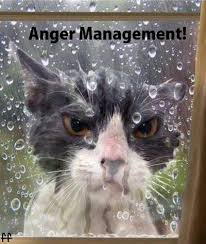 Awesome Quotes About Cats Being - anger cat quote cat and animal