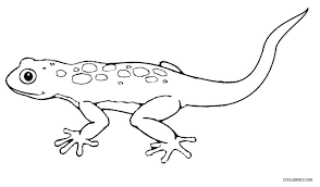 lizard coloring pages printable lizard coloring pages for kids