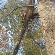 affordable tree service crossville tn stepp of faith 37 photos tree services 1765 brown creek dr