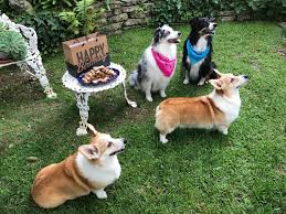 Ina Garten Make Ahead Recipes Barefoot Contessa U0027s Whole Wheat Peanut Butter Dog Biscuits