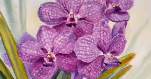Purple Orchids Janet Zeh Original Art Watercolor And Oil Paintings Purple Orchid