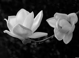 photography the power of black and white