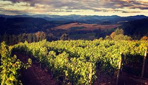 Valley Oregon Your Warm Weather Guide To Oregon S Willamette Valley Forbes