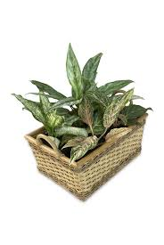 danger u2013 poisonous house plants to be aware of