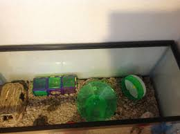Hamster Cages Petsmart Proud Of Your Hamsters Cage Page 677 Supplies U0026 Accessories