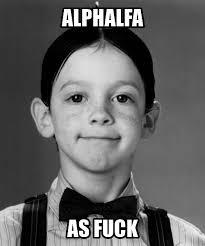 Alfalfa Meme - masterbeta