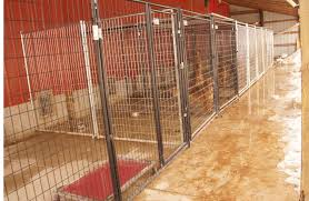Dog Kennel Flooring Outside by Simple