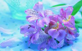 Beautiful Flowers Beautiful Flowers Wallpapers