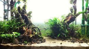 membuat aquascape bening cara membuat aquascape mu cantik aquascape indonesia koeng