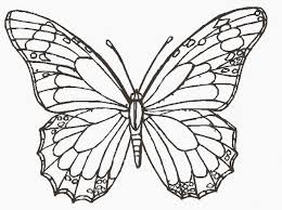 pictures colour butterfly pictures 92 coloring pages