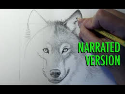 how to draw a wolf narrated youtube