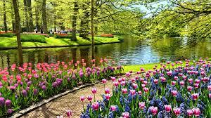 flower places flowers splendor places park flowers paradise flower pond water